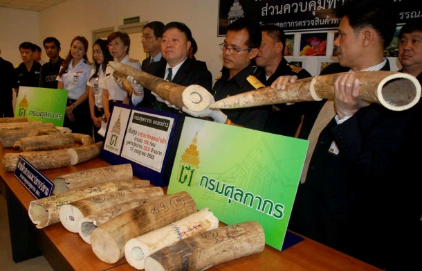 Thai customs officials display seized smuggled elephant tusks during a news conference at Suvarnabhumi Airport in Bangkok on July 17. (Photo: Reuters)