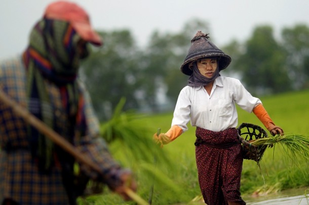 Farmers plant rice seedlings in a paddy field on the outskirts of Rangoon on July 13, 2012. (Photo: Reuters)