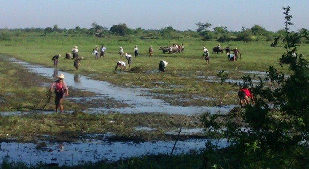 Farmers from Aungkone village in Prome District's Thegon Township began clearing farmland on Tuesday that they said was illegally confiscated from them. (Photo: The Irrawaddy)