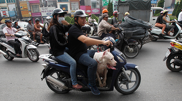 Vietnam, dogs, Southeast Asia