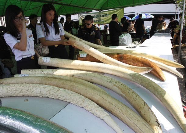 ivory trade in Thailand