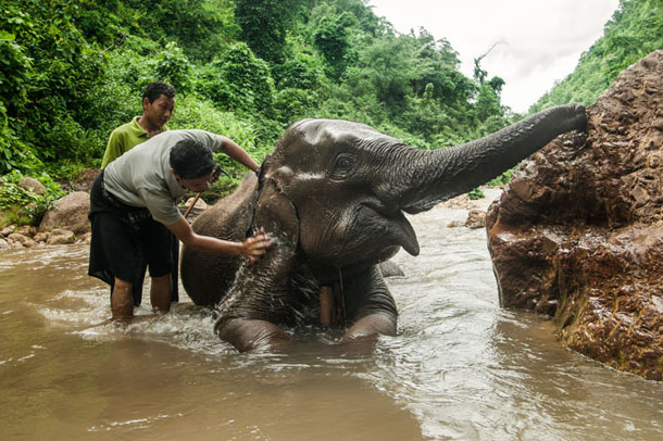 Five-year-old elephant Ko Chit toots his trunk in happiness while getting a bath from Pui and a mahout. (Photo: Christopher Ian Smith)