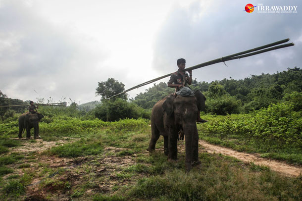 At Myaing Hay Wun logging camp, 21 elephants and their handlers have become jobless after an April 1 ban on the export of raw logs caused a sharp drop in timber trade. (Photo: JPaing / The Irrawaddy)