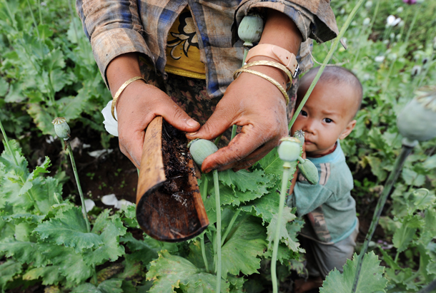 A young child stays close to his mother as she gathers opium resin from one of the many poppy fields in Phekon Township, southern Shan State. Click on the box below to see more images. (Photo: Steve Tickner / The Irrawaddy)