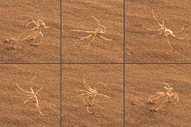 A sequence of photos shows a spider in Morocco