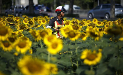 A policeman walks at a sunflower field in Bangkok, Thailand, January 13, 2016.  (Photo: Athit Perawongmetha / Reuters)