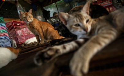 The sanctuary for felines in need has taken in more than 200 cats since opening in October. (Photo: Hein Htet / The Irrawaddy)