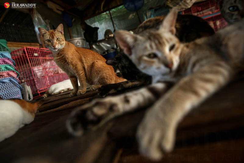 A Cat Safe Haven on the Outskirts of Rangoon