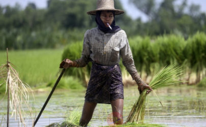 A farmer in Irrawaddy Division. (Photo: JPaing / The Irrawaddy)