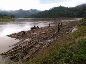 Illegal Log Trade Continues on Salween River