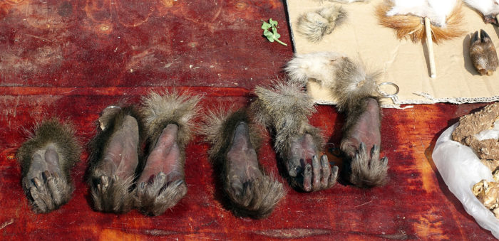 Wildlife parts are sold as trophy pieces, for decoration, or as amulets and lucky keychains, including severed monkey hands with paw pads that are still soft. (Photos: Naomi Hellmann)