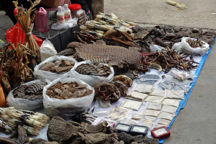 Dried parts from a variety of animals, including critically endangered species such as pangolin, are carefully arranged by a Mongla vendor. (Photos: Naomi Hellmann)