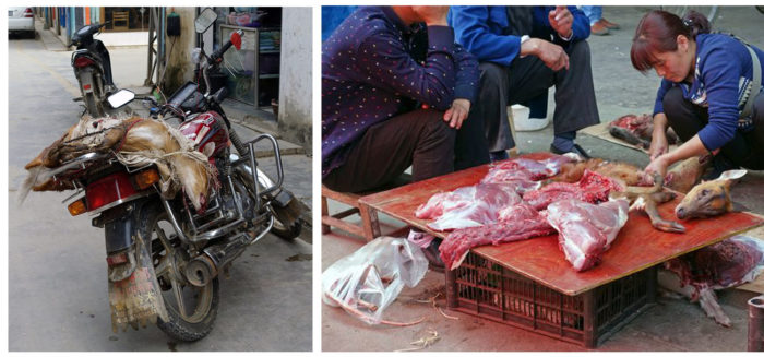 A barking deer, or muntjac, hunted in the Wa State is strapped to the back of a motorcycle in Pangkham, the capital. Once in Mongla, barking deer is cut up, its skin and other parts offered for sale. (Photos: Naomi Hellmann)