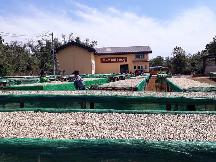Shan State's 'Coffee Lady' Moves up the Value Chain