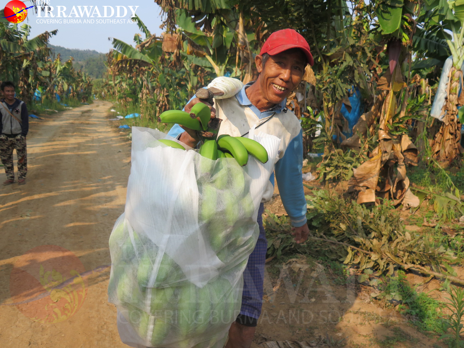 growing a controversy  a kachin banana plantation in pictures