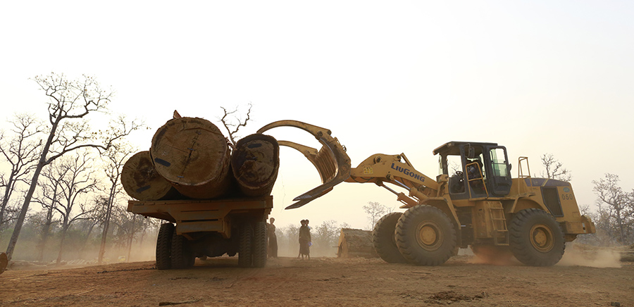 Loopholes in Myanmar's Forest Sector Cost Govt Million in