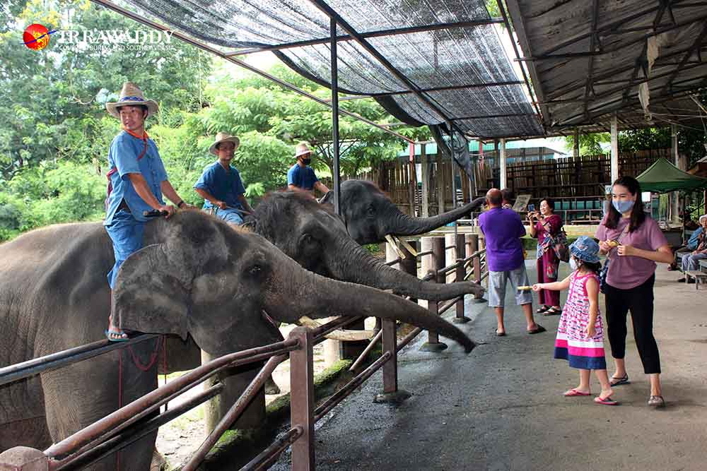 While Elephants Enjoy Some Rest, Humans Suffer as COVID-19 Hits Thai Tourism